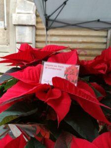 Mercatini di Natale – Pietrasanta 2/12/2018